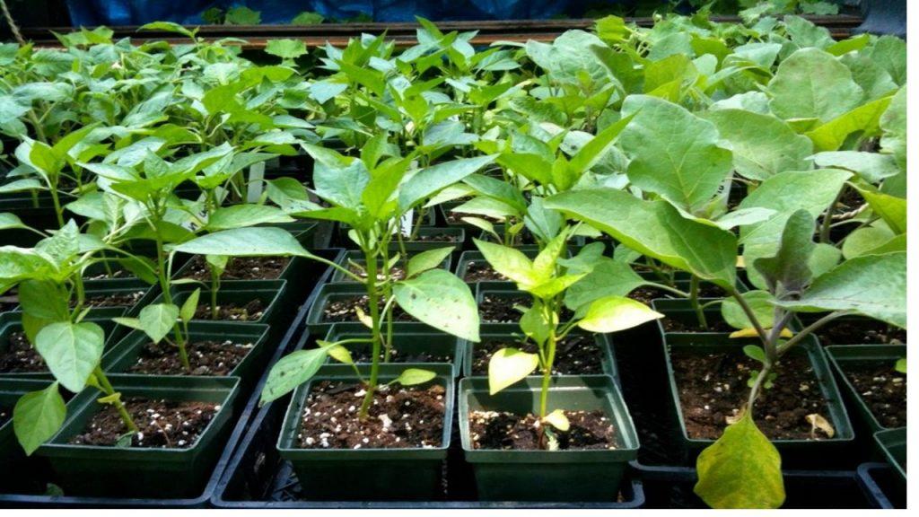 Зеленчуковата градина през февруари