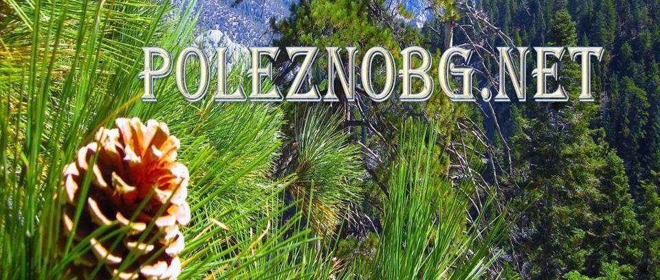 poleznobg.net
